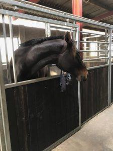 Opstaldet hest i hestepension
