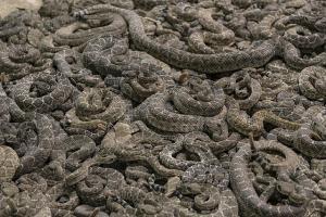 significado de sueño con muchas serpientes