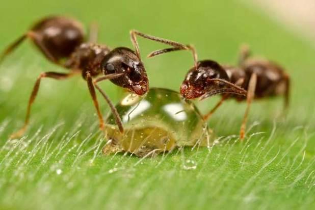 Soñar con hormigas que pican