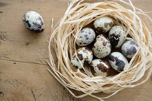 Soñar con huevos de codorniz