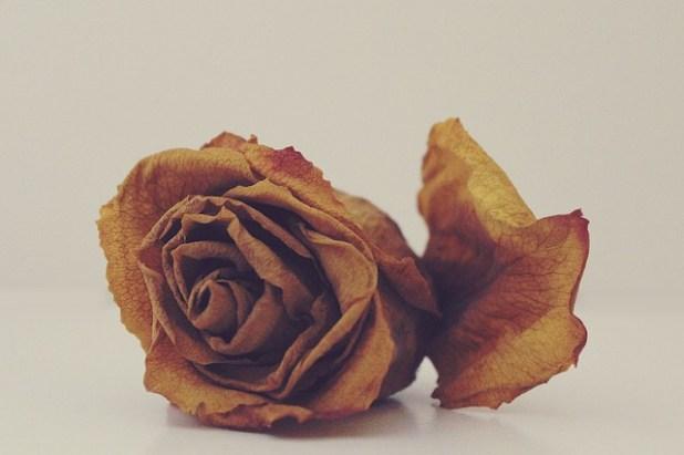 Soñar con flores (interpretación general)