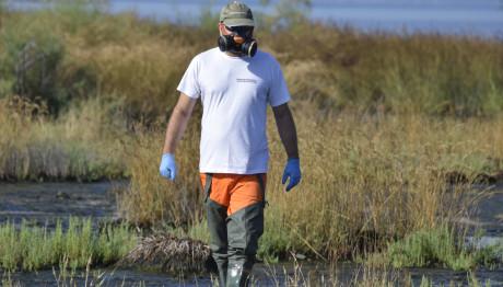 Ξεκίνησαν οι ψεκασμοί για τα κουνούπια στην Αττική