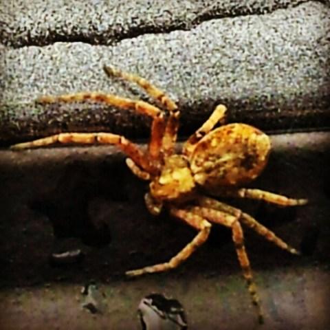 Car spider