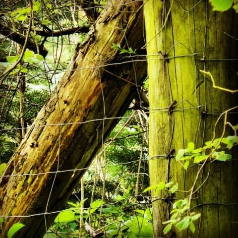 Wood in woods