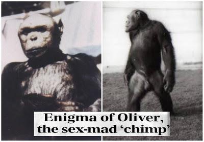 Το «υβρίδιο» ανθρώπου και χιμπατζή. 'Επινε καφέ και αλκοόλ, περπατούσε όρθιος και του άρεσαν οι γυναίκες. Έγινε πειραματόζωο και έζησε ως τα 52 του χρόνια!