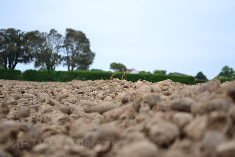 Jersey potatoe field