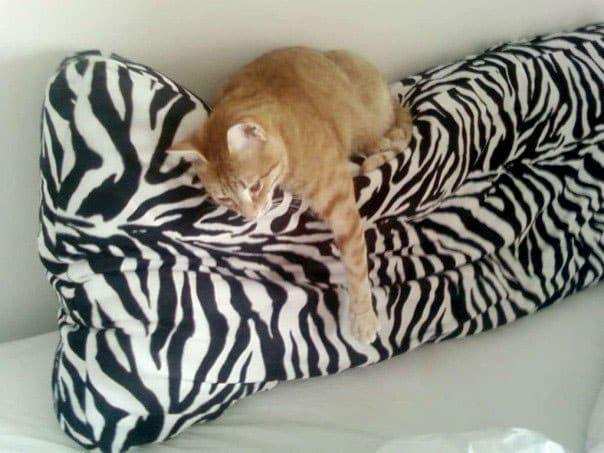 "Resting on his ""zebra pillow"""