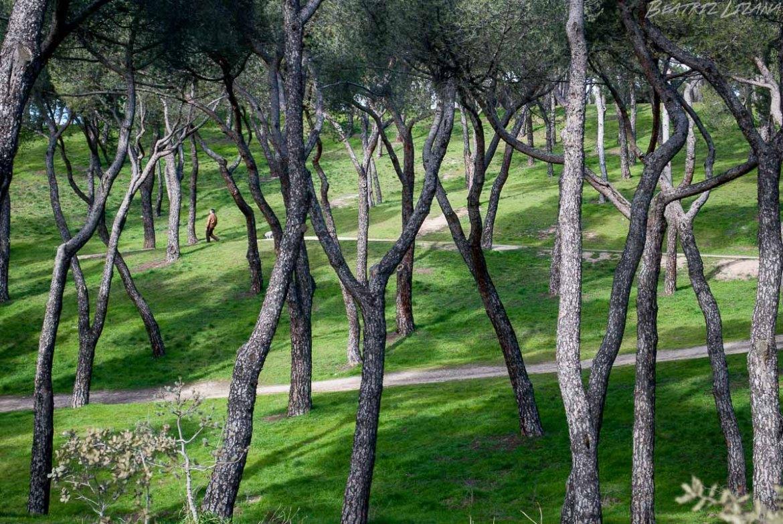 Árbol | Una imagen, una historia