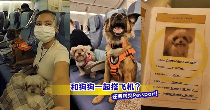 XplodeLIAO_狗狗_搭飞机_情感辅助犬_导盲犬