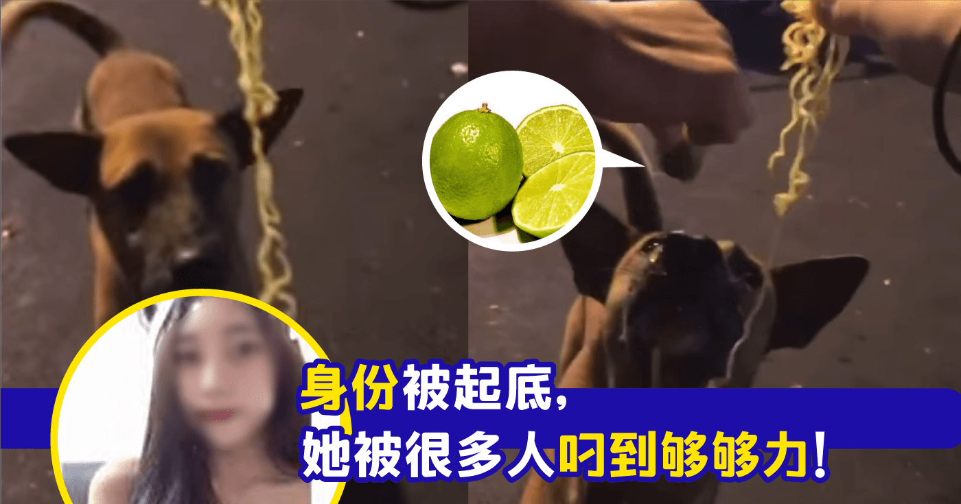 XplodeLIAO_女网红戏弄流浪狗_拍视频喂狗吃maggie_挤入酸柑汁