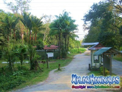 Jardin botanico lancetilla areasprotegidasdehonduras for Informacion sobre el jardin botanico