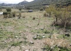 Μυστήριο  με εκατοντάδες κόκκαλα σε χωράφι στο Χαλκερό