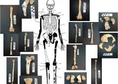 Συνολικά πέντε οι σκελετοί στον τάφο της Αμφίπολης