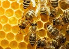 Γιορτή μελιού και προϊόντων μέλισσας στο Ζυγός
