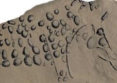 Οι πρόδρομοι του Σερά και του Βαν Γκογκ, Προϊστορικές βραχογραφίες 38.000 ετών στη Γαλλία θυμίζουν την πουαντιγιστική τεχνική (και τα σύγχρονα πίξελ)