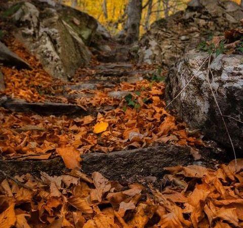 ΜΕΡΟΡΟΠΗ: Φθινοπωρινές εικόνες του Παγγαίου