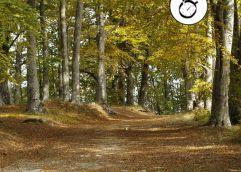 Τα φύλλα του φθινοπώρου πέφτουν πιο νωρίς λόγω της κλιματικής αλλαγής στα δέντρα της Ευρώπης