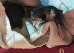 Αναζητείται ο δράστης που πέταξε γατάκια στα σκουπίδια