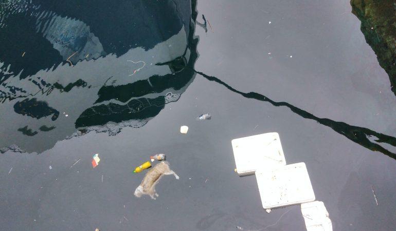 Σκουπίδια και μια νεκρή γάτα στο λιμάνι της Καβάλας