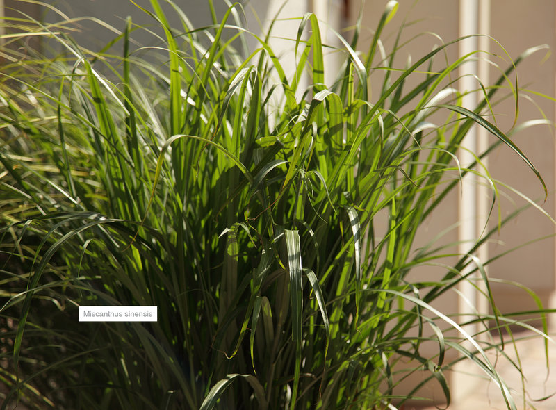 Grser XXL Pflanzen