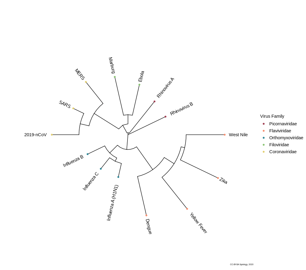 Circular tree visualization of the phylogenetic relationships of 2019-nCoV with legend.