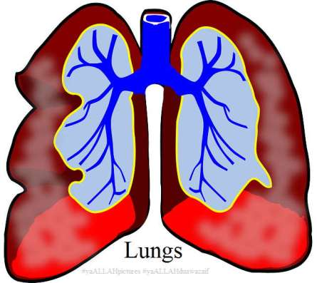Lungs #yaALLAHpictures