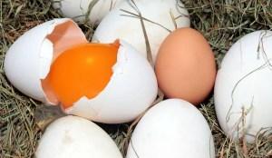 egg-BigRemedies