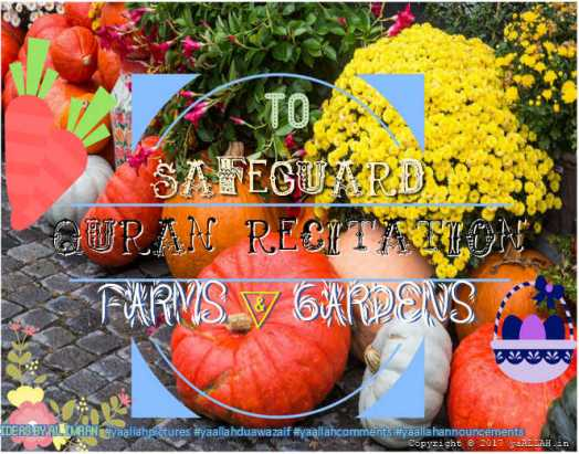 Quran-Recitation-to-Safeguard-Farms-&-Gardens-Kheton-ki-hifazat-yaALLAH-110317