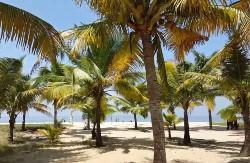 De petits cocotiers sur du sable