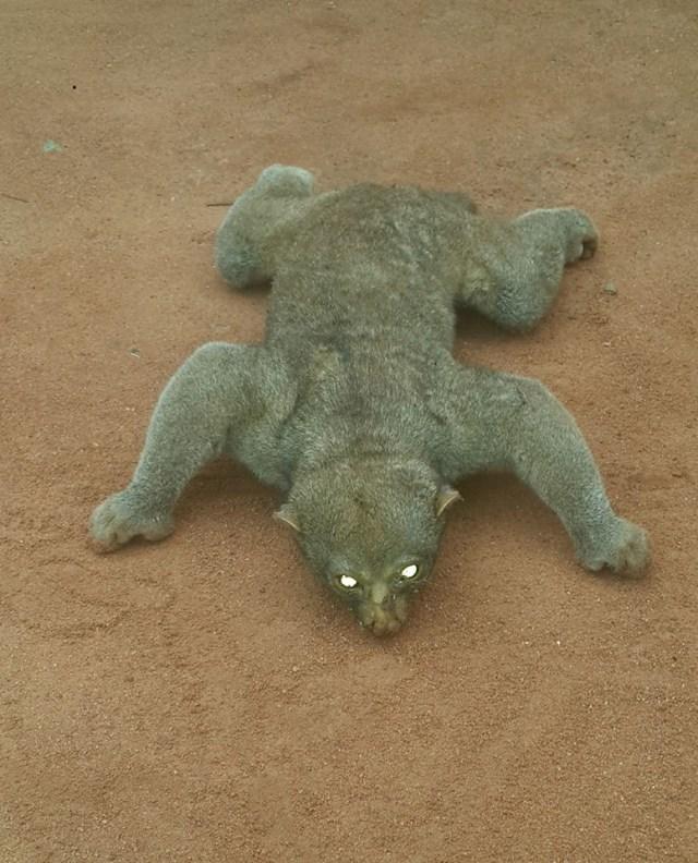 Strange looking animal found dead