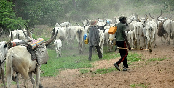 Igbo Group tells herdsmen