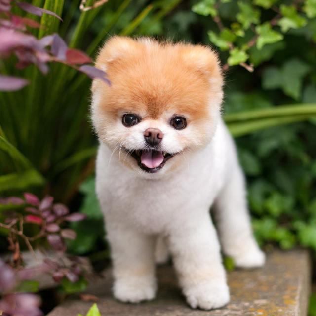 World's cutest dog dies