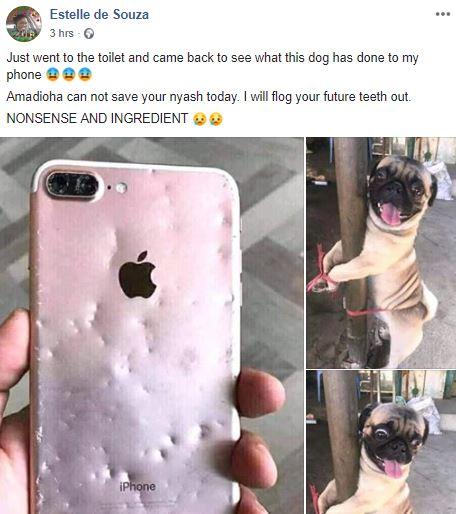 Nigerian lady punishes dog
