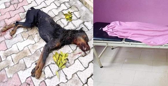 b3d5aaa895b Rottweiler dog shot dead after biting pupil to death in Port-Harcourt  (Photos) - YabaLeftOnline
