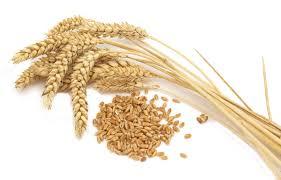 Whole wheat flour vs. Maida or refined flour