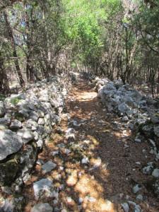 Dappled pathways