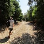The stony track