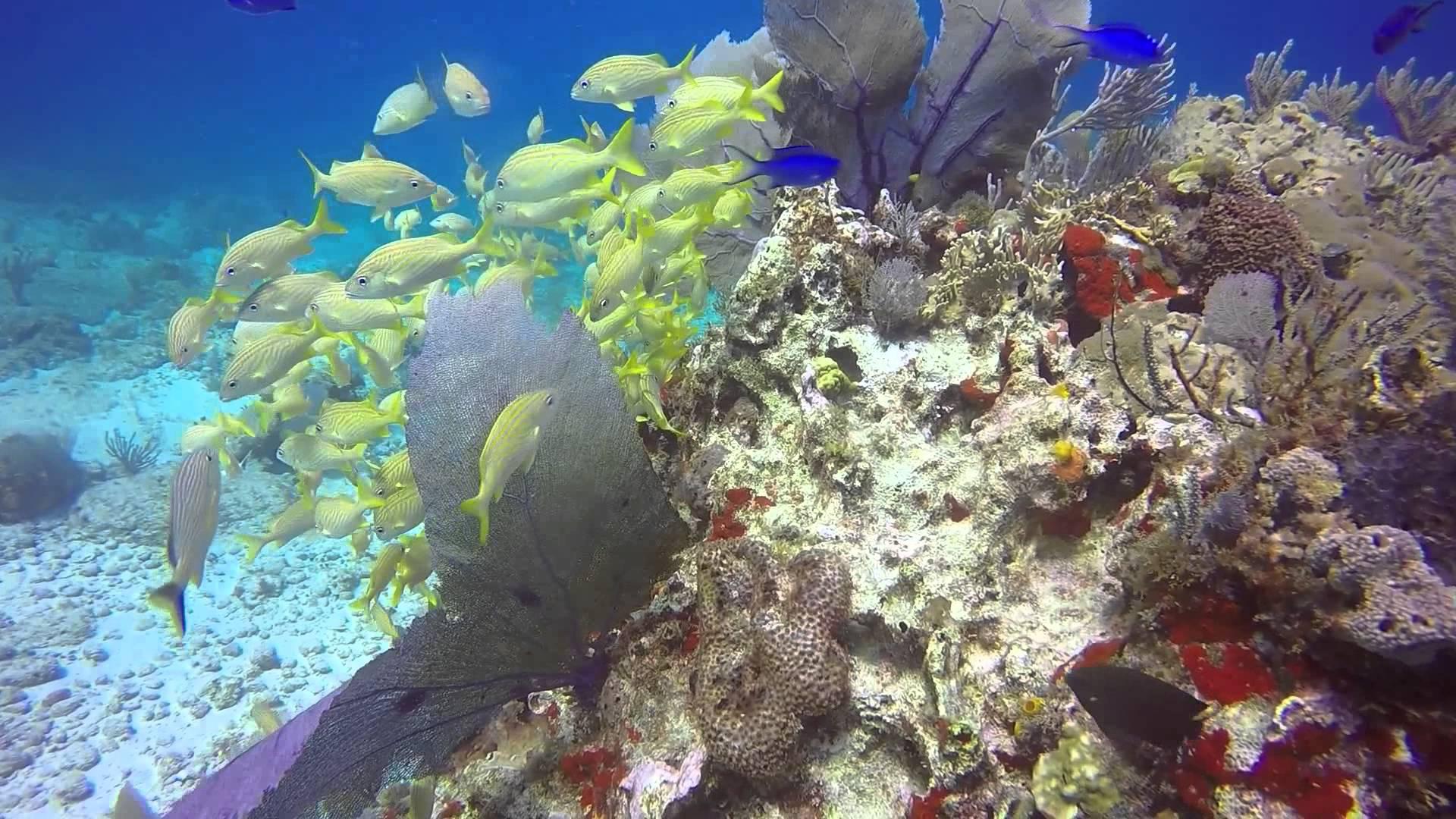 Manchones Reef