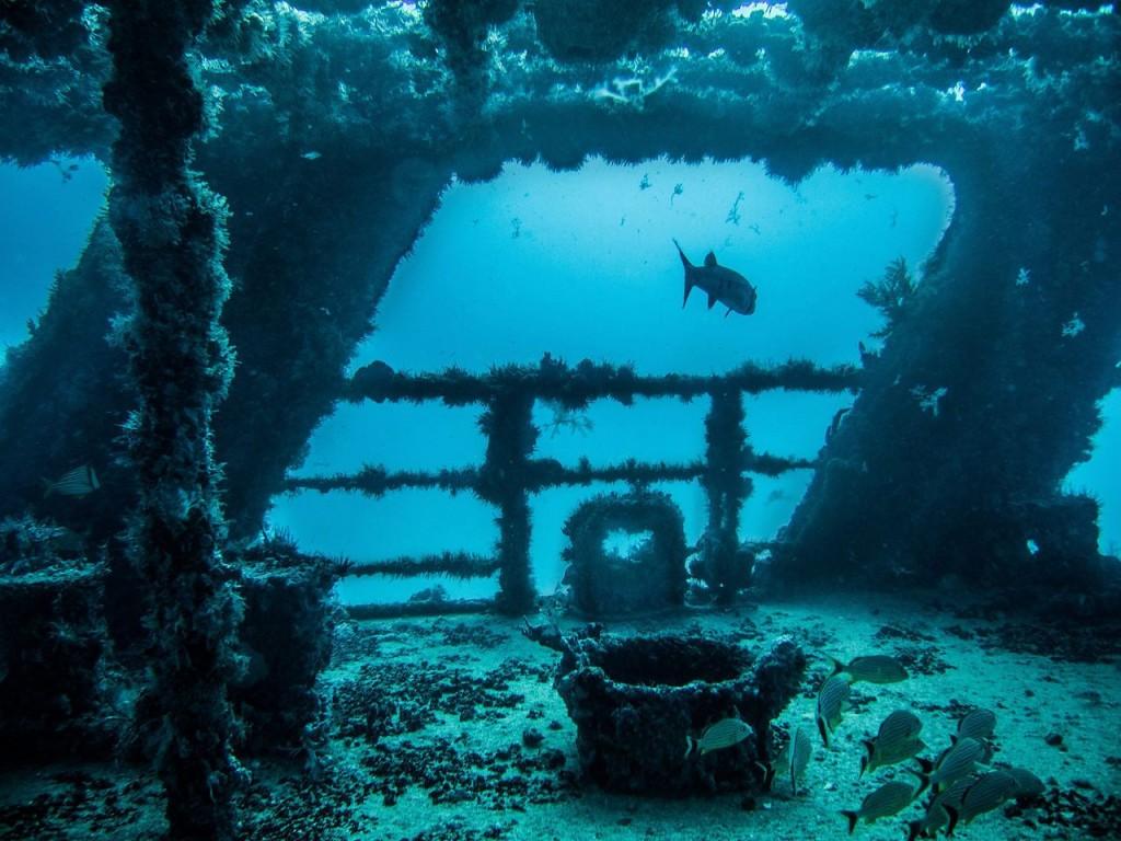 Scuba Diving Cancun Cancun Scuba Diving Excursions