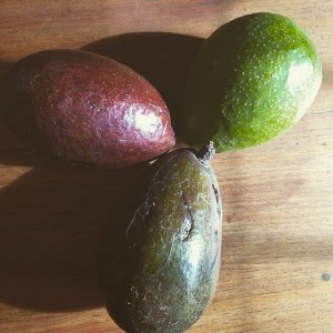 Avocado Palta Aguacate