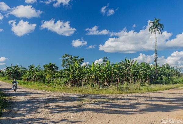 Banana Landscape Rurrenabque Bolivia