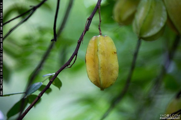 Amazon_Food_carambola