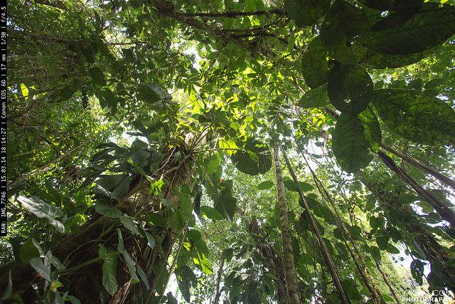 Amazon_Jungle_CostaRica1