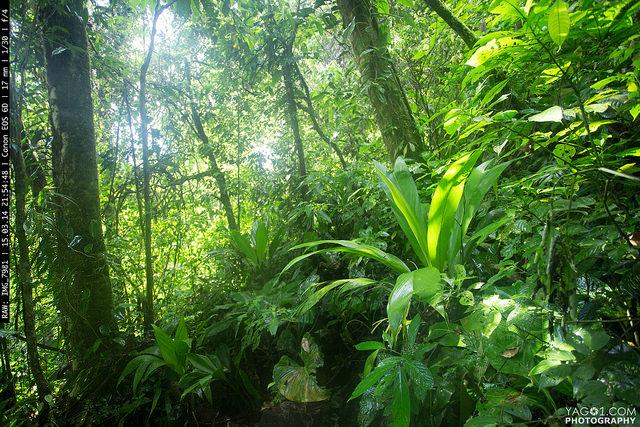 Jungle - Piedras Blancas, Puntarenas, Costa Rica