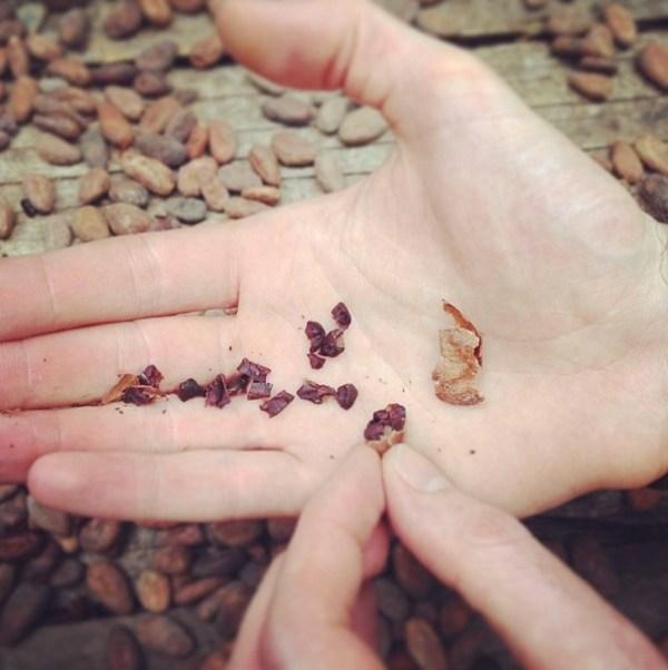 Raw Cacao Seeds chocolate