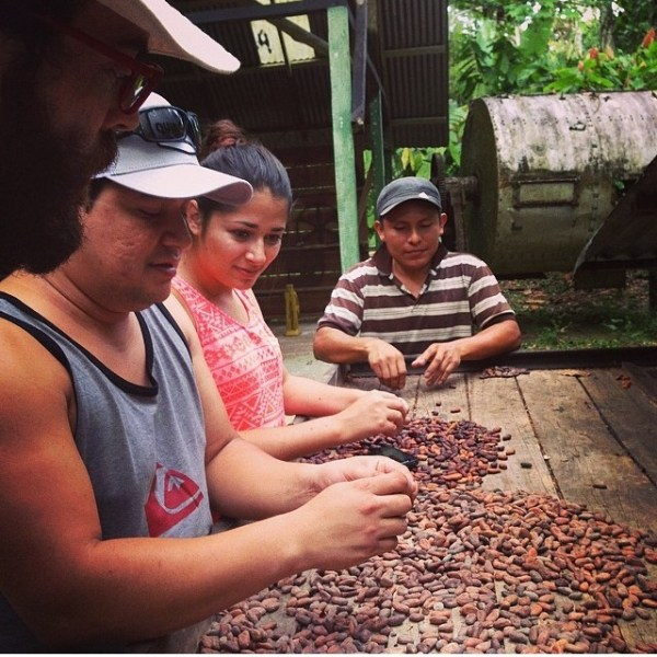 cacao seeds selection