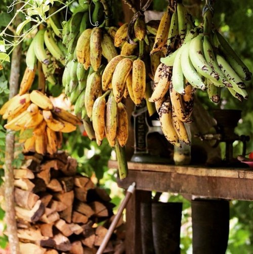 Santuario y Finca Ecológica Quebrada del Plátano - 0