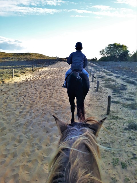 Stage équitation à erdeven