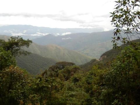 Equateur Loja Parc Podocarpus