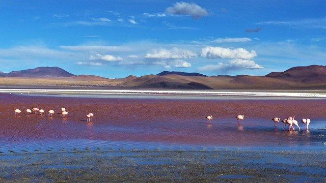 Bolivie Sud Lipez Laguna Colorada